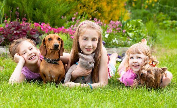 domashnie zhivotnye i deti animal reader.ru 003