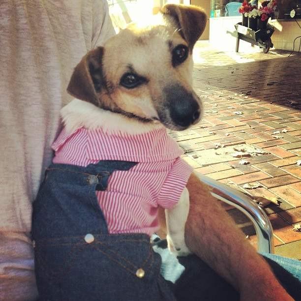 Одежда для собак своими руками фото