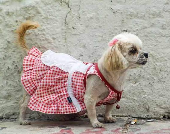 Одежда для собак своими руками: фото